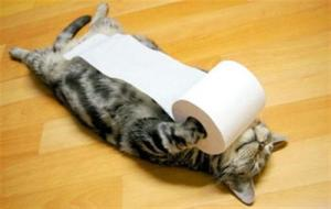 my-toilet-paper-cat-cats-kitten-kitty-pic-picture-funny-lolcat-cute-fun-lovely-photo-images