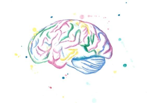 2אילנית דורפמן עבור לבריאותה אפילפסיה מח